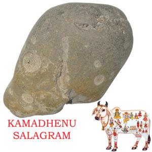 a5044-kamadhenu-surabhi-the-holy-cow-shaligram