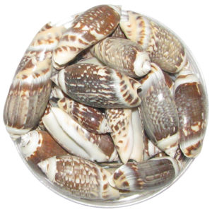 a1100-brown-and-white-sea-shells-100-grams