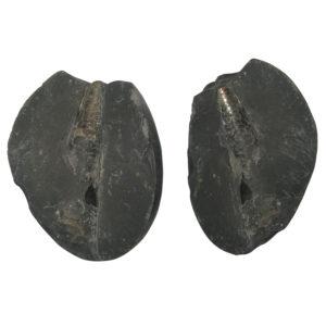 a5022-natural-swarna-shivaling-shaligram-shila-saligram-sila-salagram-stone-saligramam